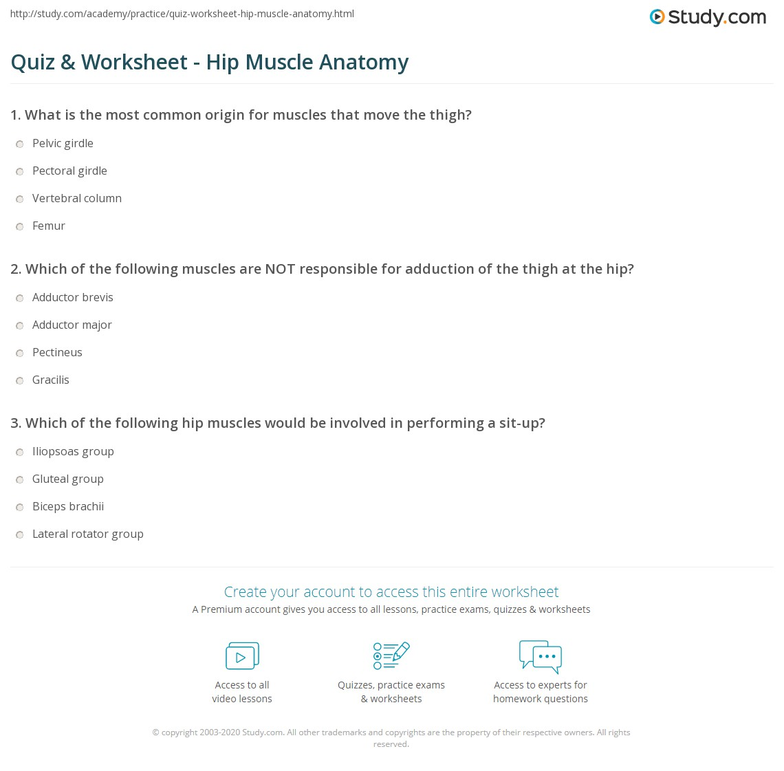 Quiz & Worksheet - Hip Muscle Anatomy | Study.com