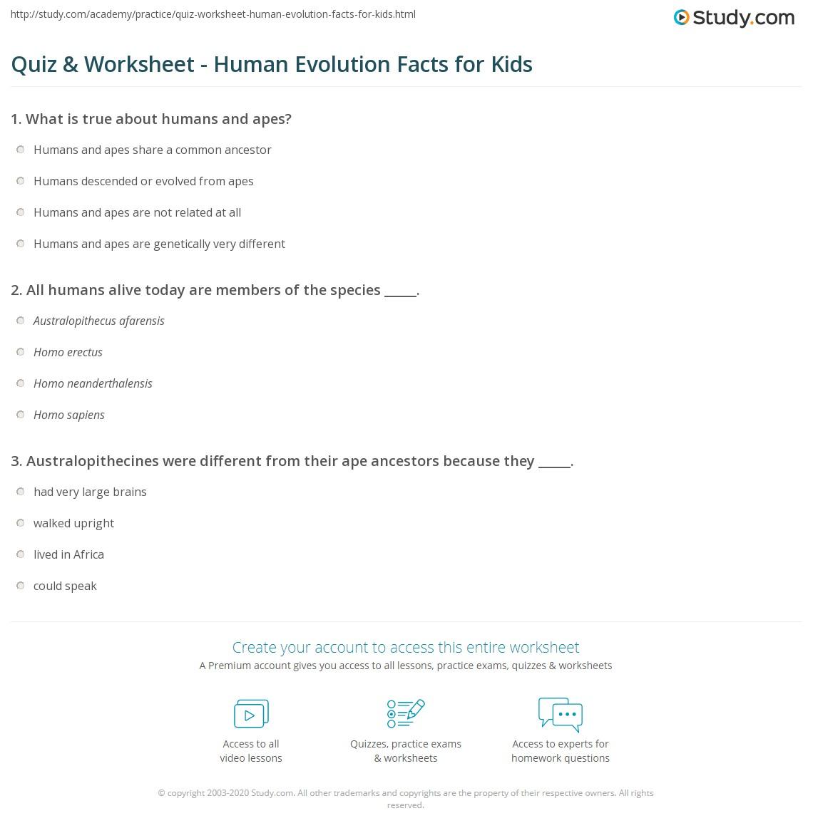 Quiz & Worksheet - Human Evolution Facts for Kids | Study.com