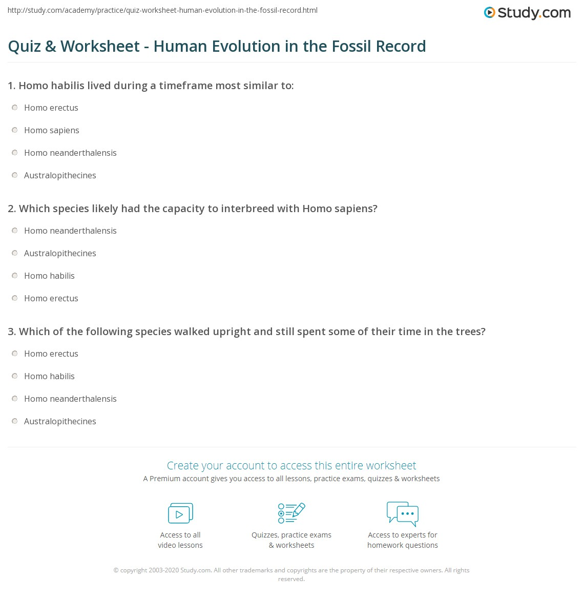 Quiz Worksheet Human Evolution In The Fossil Record