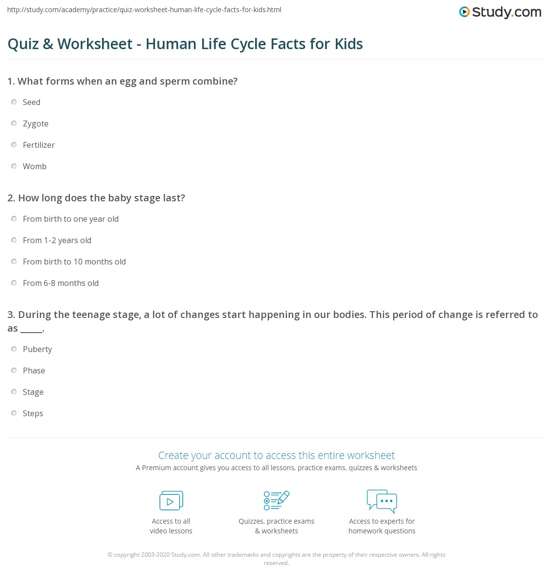 Quiz worksheet human life cycle facts for kids study print human life cycle lesson for kids worksheet ibookread