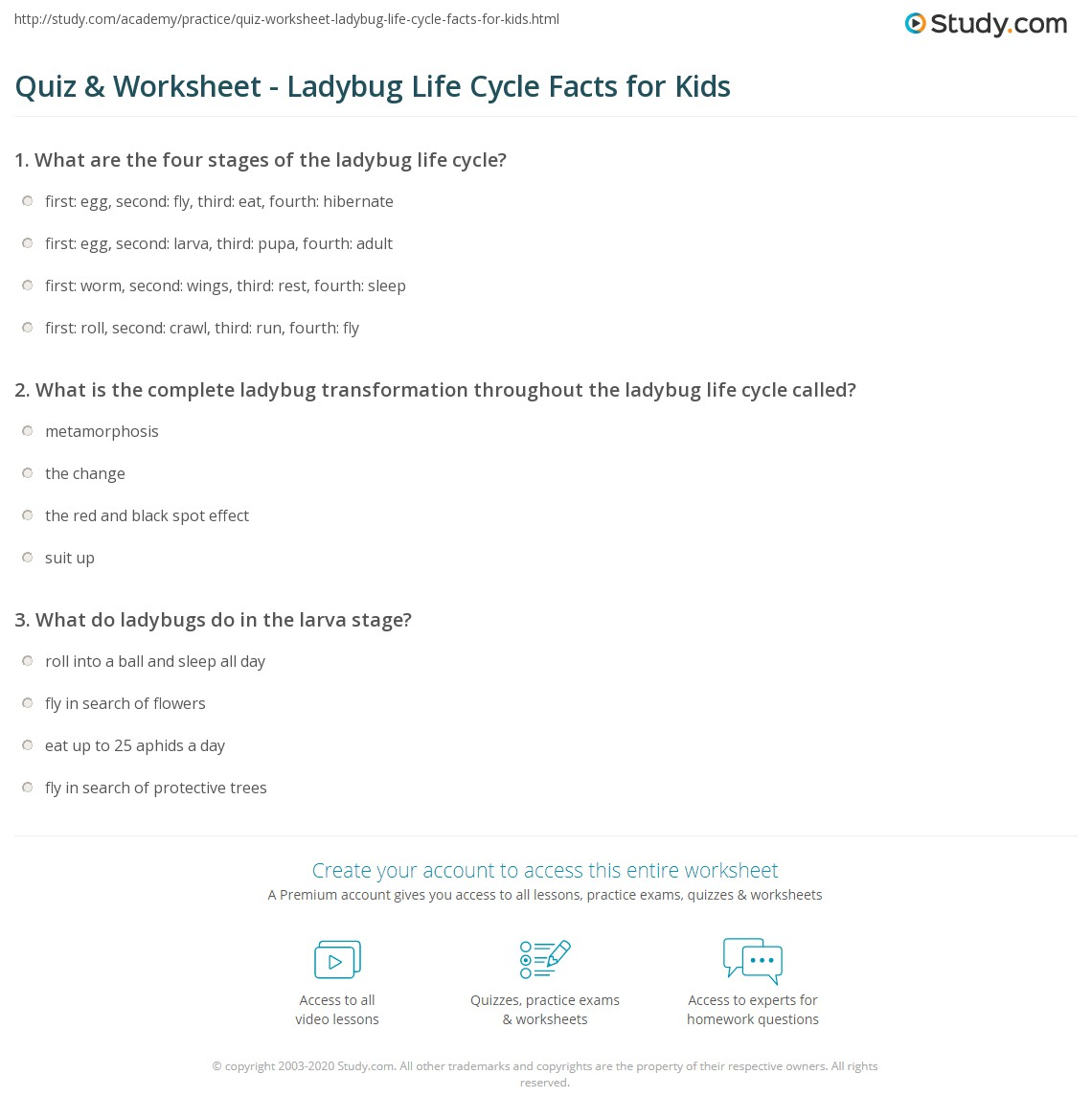 Quiz Worksheet Ladybug Life Cycle Facts for Kids – Ladybug Life Cycle Worksheet
