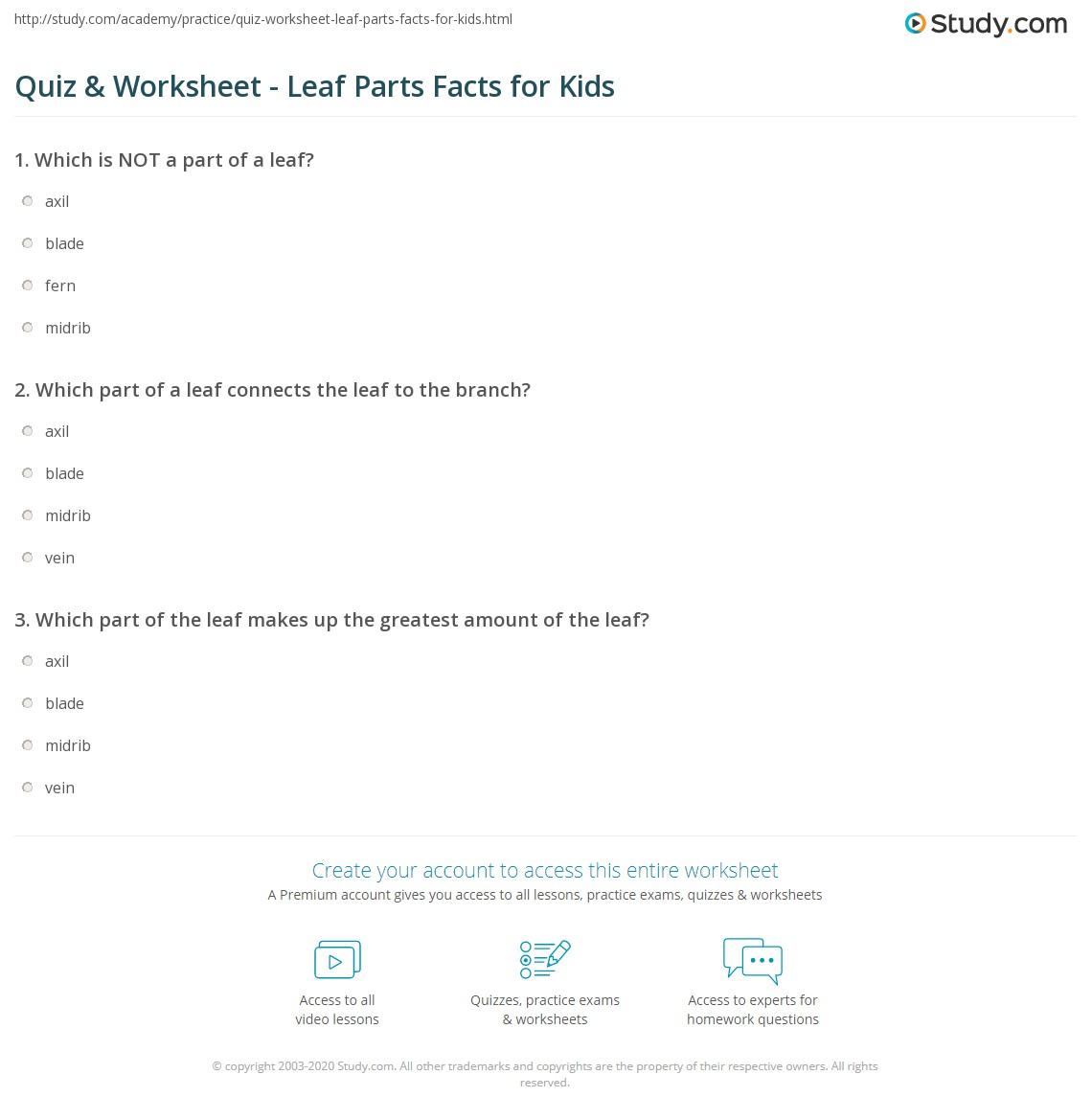 Quiz Worksheet Leaf Parts Facts for Kids – Parts of a Leaf Worksheet