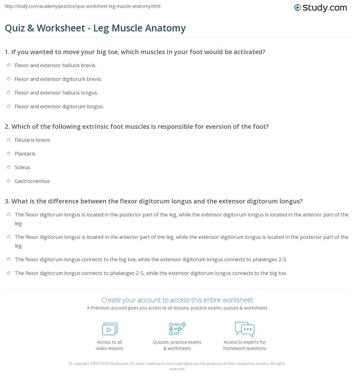 Quiz & Worksheet - Leg Muscle Anatomy | Study.com