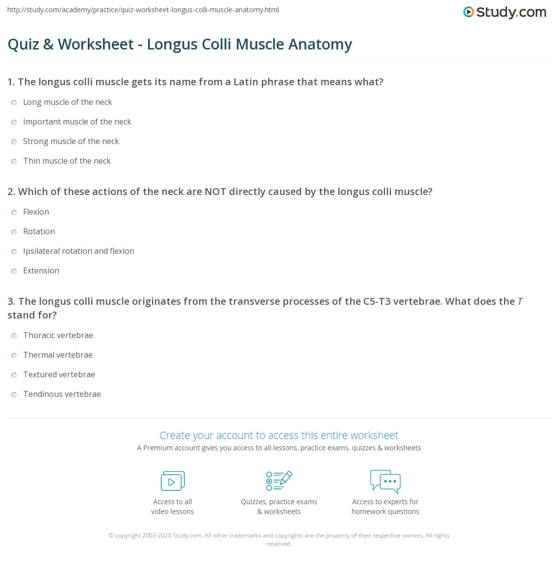 Quiz Worksheet Longus Colli Muscle Anatomy Study
