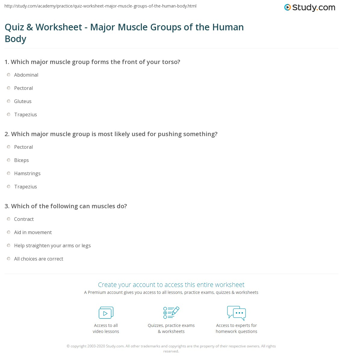 Worksheets Human Body Worksheets quiz worksheet major muscle groups of the human body study com print worksheet