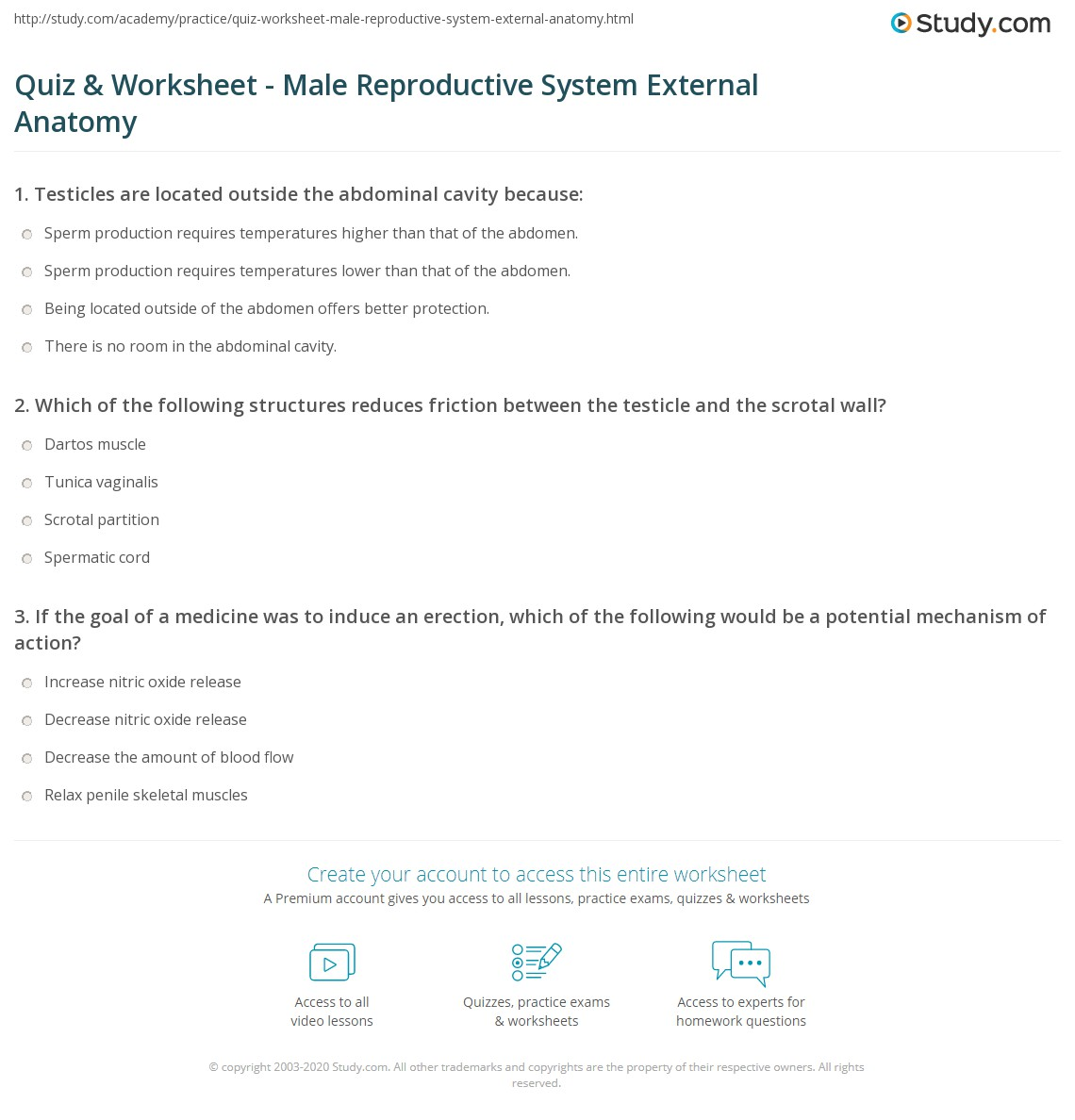 Quiz Worksheet Male Reproductive System External Anatomy Study