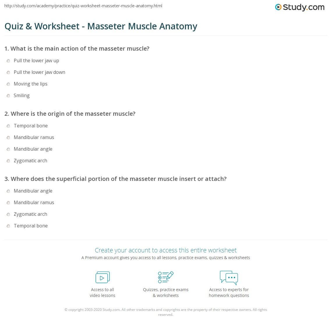 Quiz Worksheet Masseter Muscle Anatomy Study