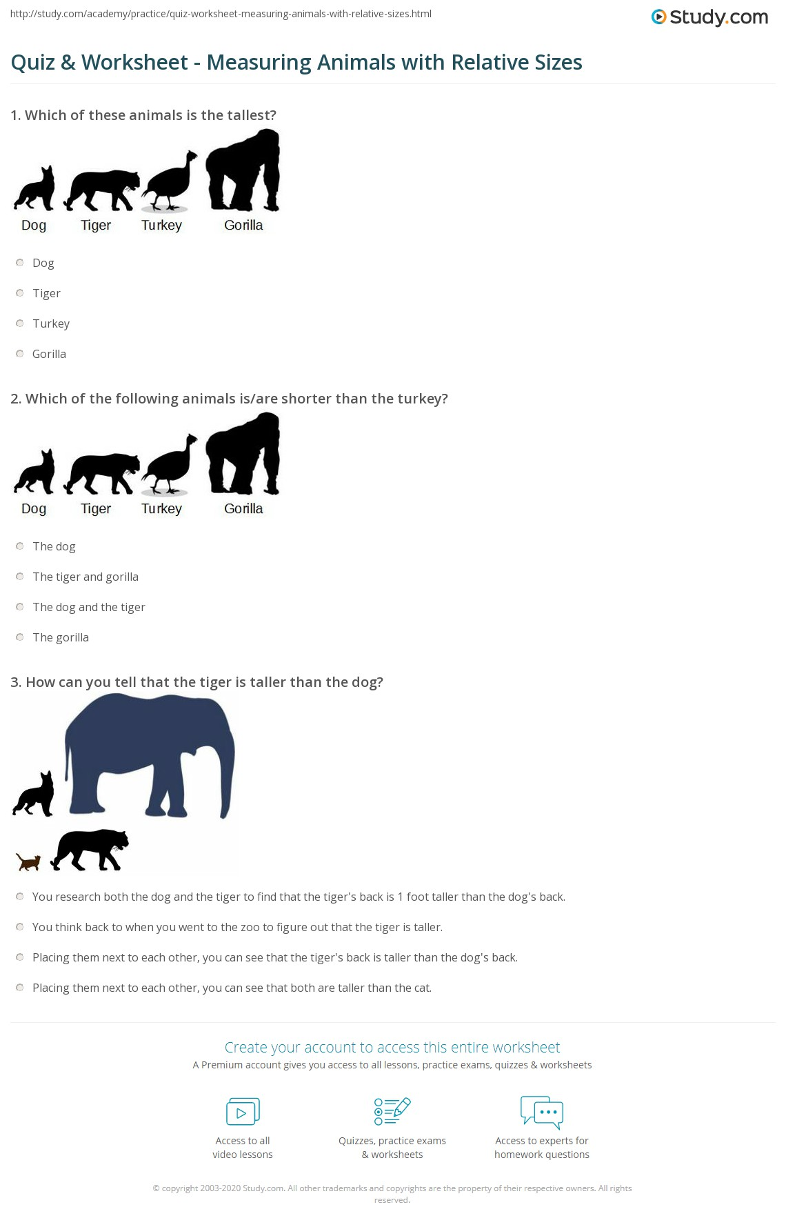 Quiz Worksheet Measuring Animals With Relative Sizes Study