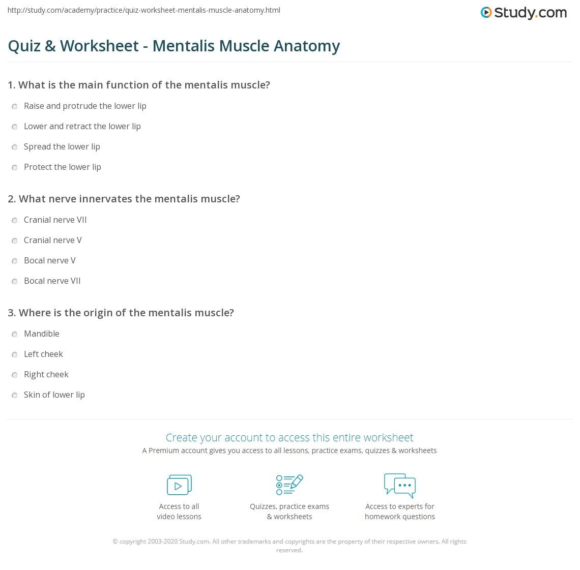 quiz worksheet mentalis muscle anatomy study com