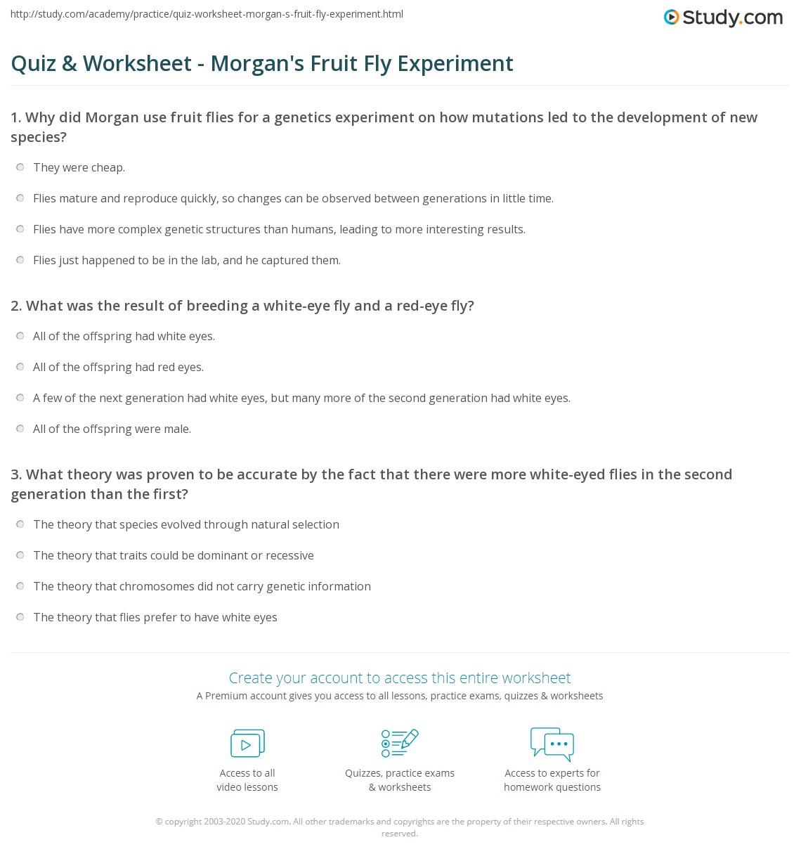 quiz worksheet morgan s fruit fly experiment com print thomas hunt morgan s fruit fly experiment worksheet