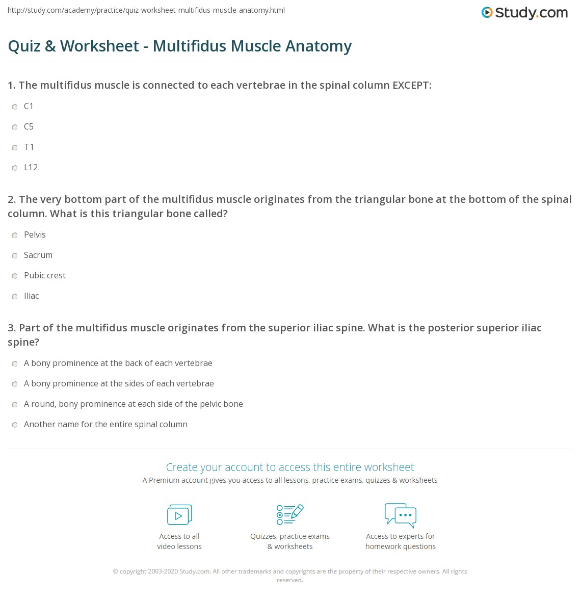 Quiz & Worksheet - Multifidus Muscle Anatomy | Study.com