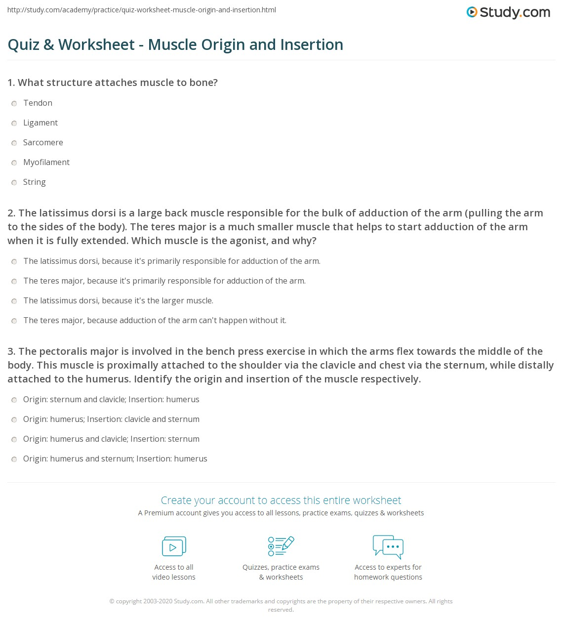 Quiz & Worksheet - Muscle Origin and Insertion | Study.com