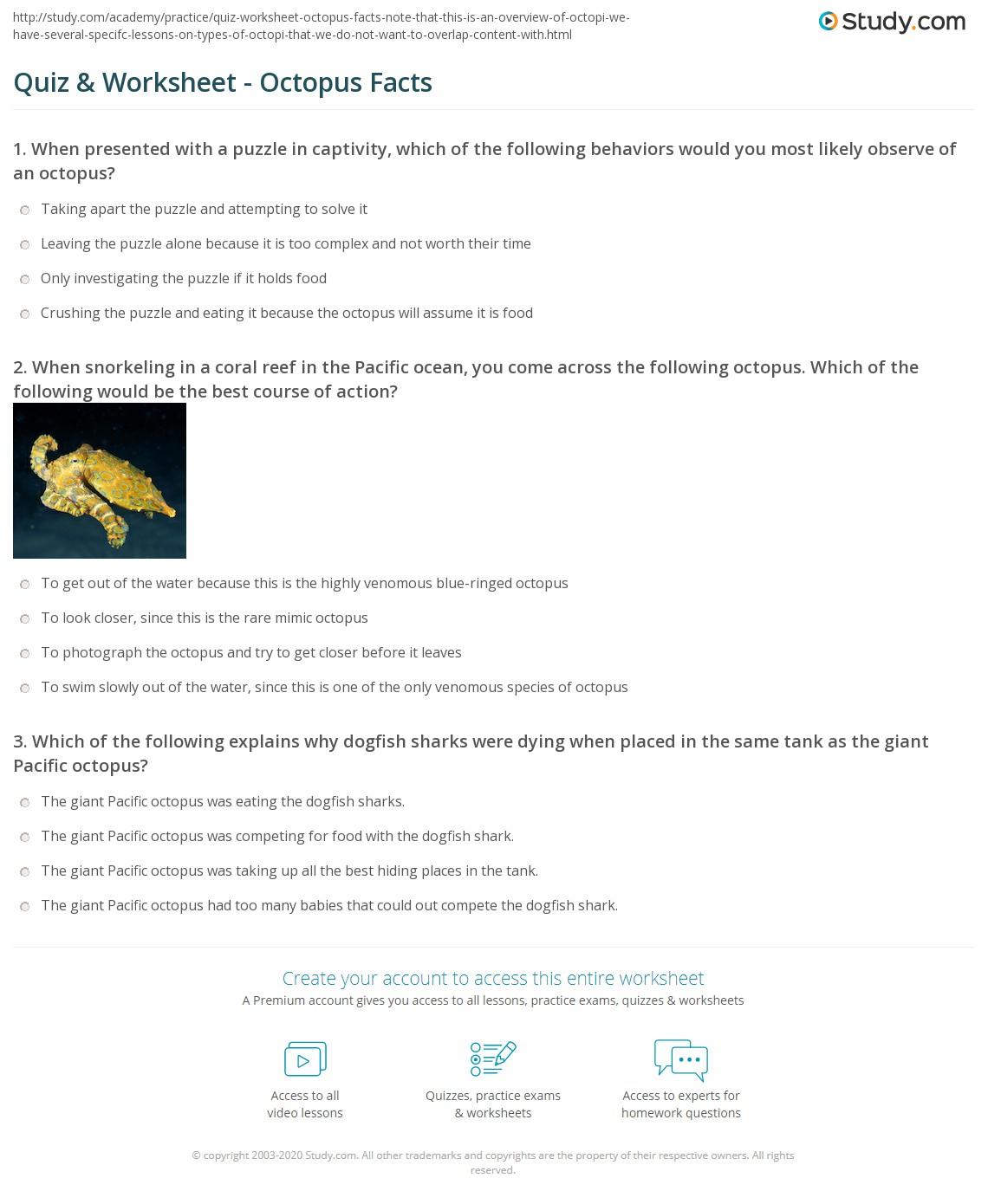 Quiz & Worksheet - Octopus Facts | Study.com
