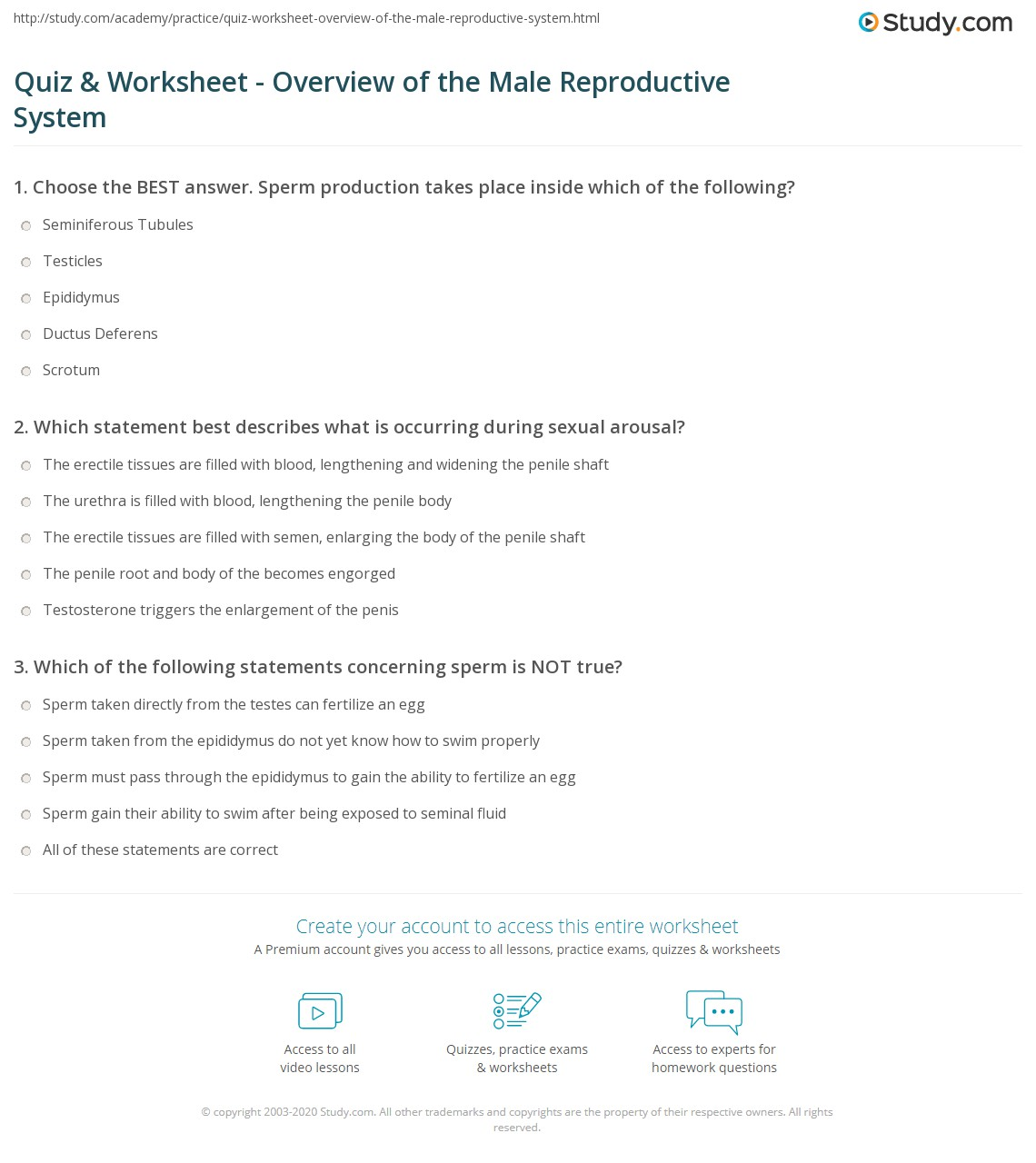 Quiz Worksheet Overview Of The Male Reproductive System Study