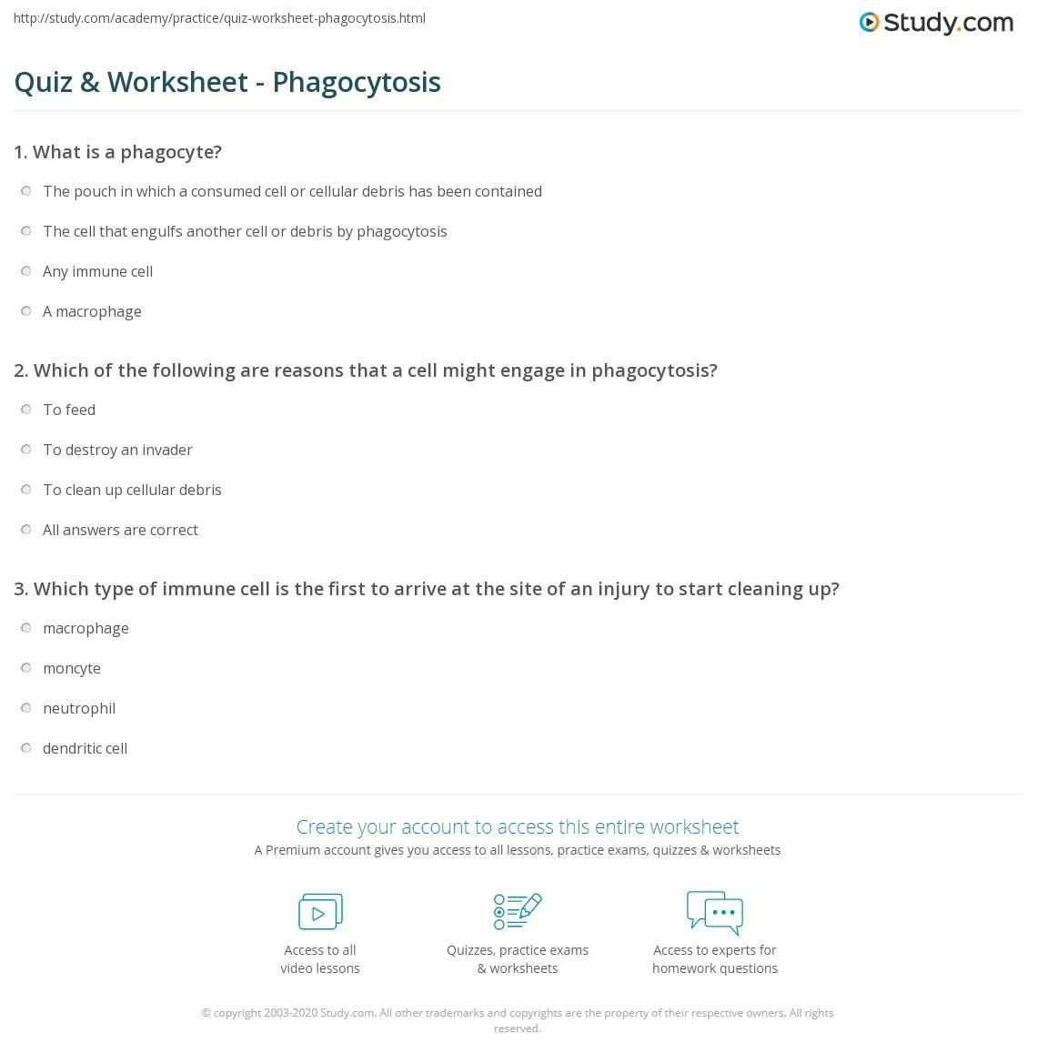 Geyser Diagram Worksheet - Online Schematic Diagram •