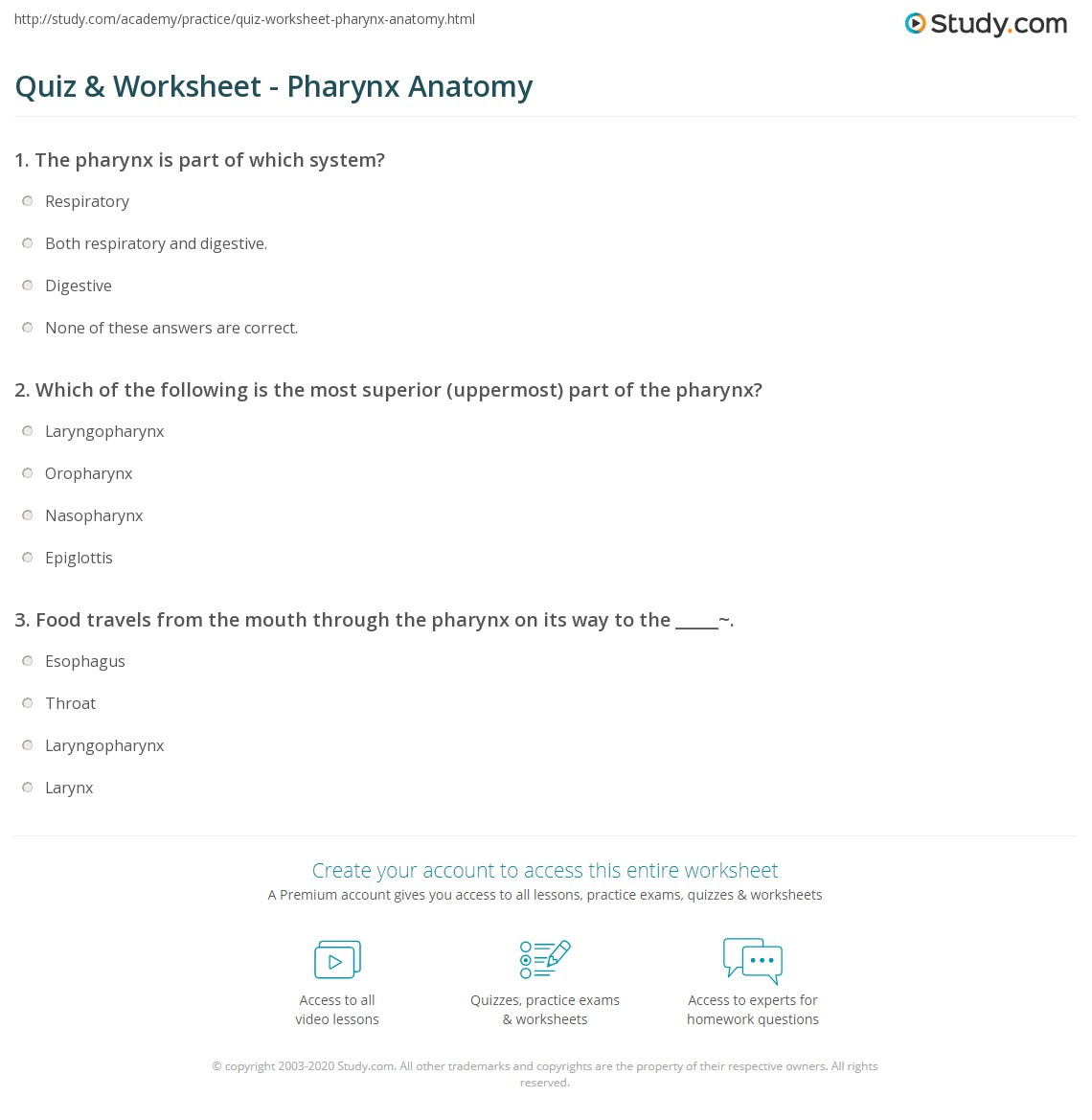Quiz & Worksheet - Pharynx Anatomy | Study.com