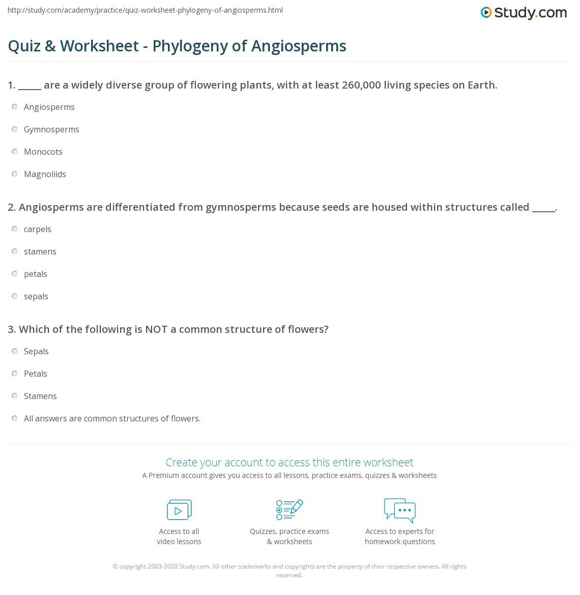 quiz worksheet phylogeny of angiosperms. Black Bedroom Furniture Sets. Home Design Ideas