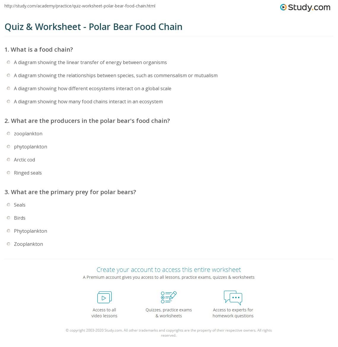 Quiz & Worksheet - Polar Bear Food Chain   Study.com
