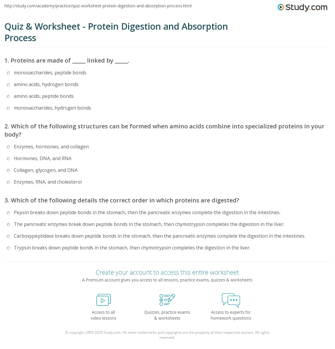 Quiz Worksheet Protein Digestion And Absorption Process Study Com