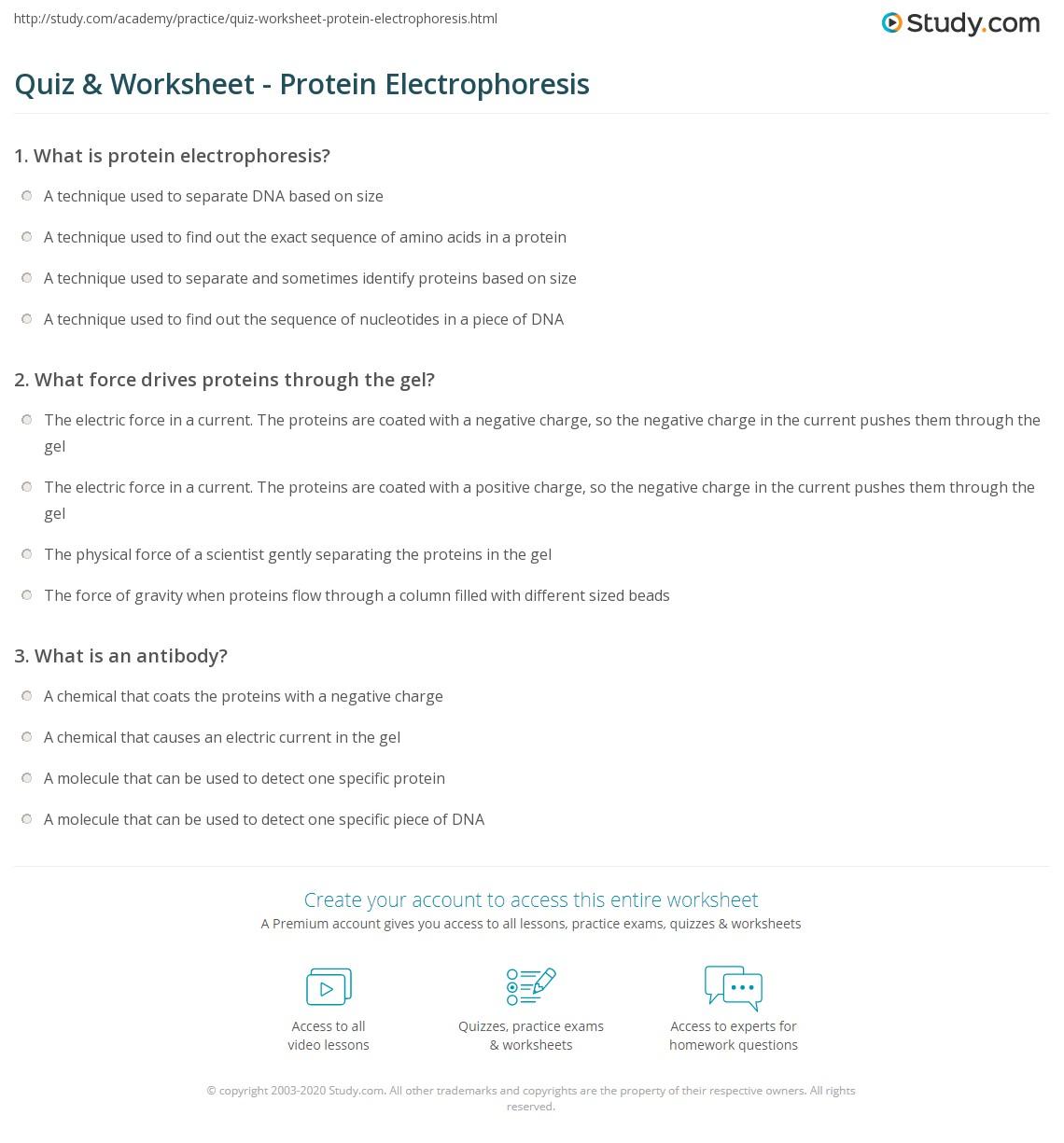 Worksheets Gel Electrophoresis Worksheet quiz worksheet protein electrophoresis study com print what is worksheet