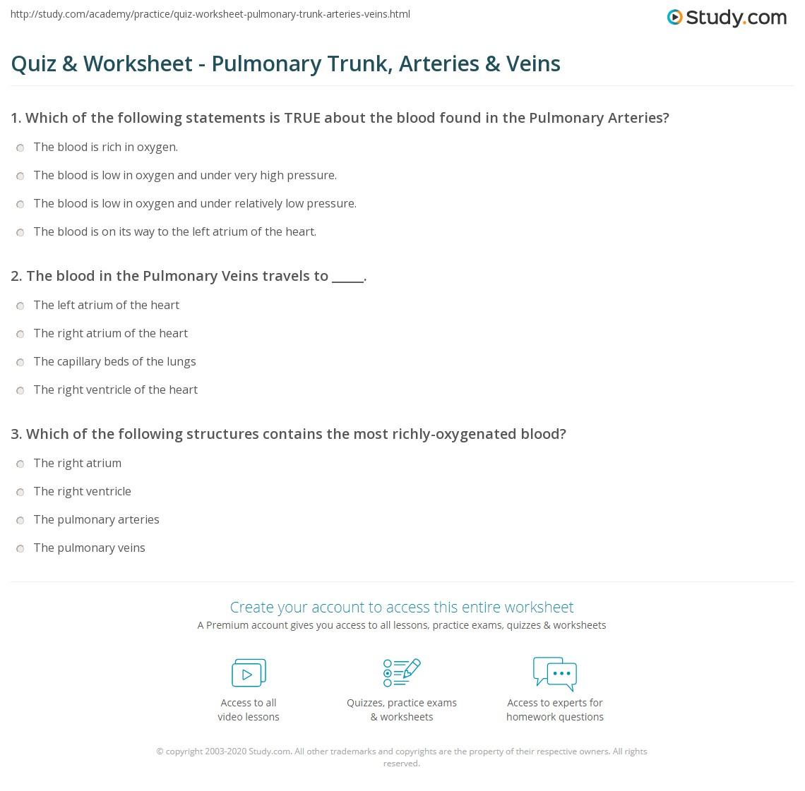 Quiz Worksheet Pulmonary Trunk Arteries Veins Study