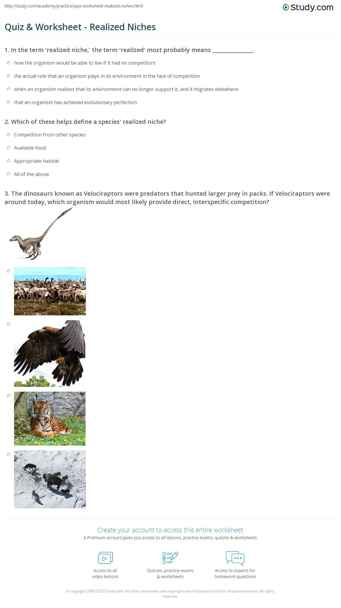 Quiz Worksheet Realized Niches – Predator Prey Worksheet
