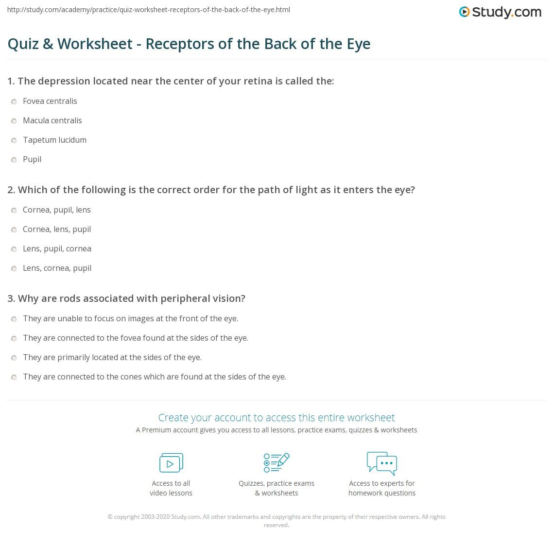 Quiz Worksheet Receptors Of The Back Of The Eye Study