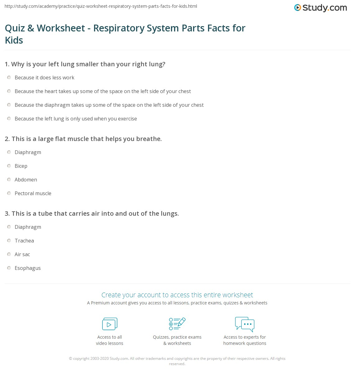 Quiz Worksheet Respiratory System Parts Facts For Kids