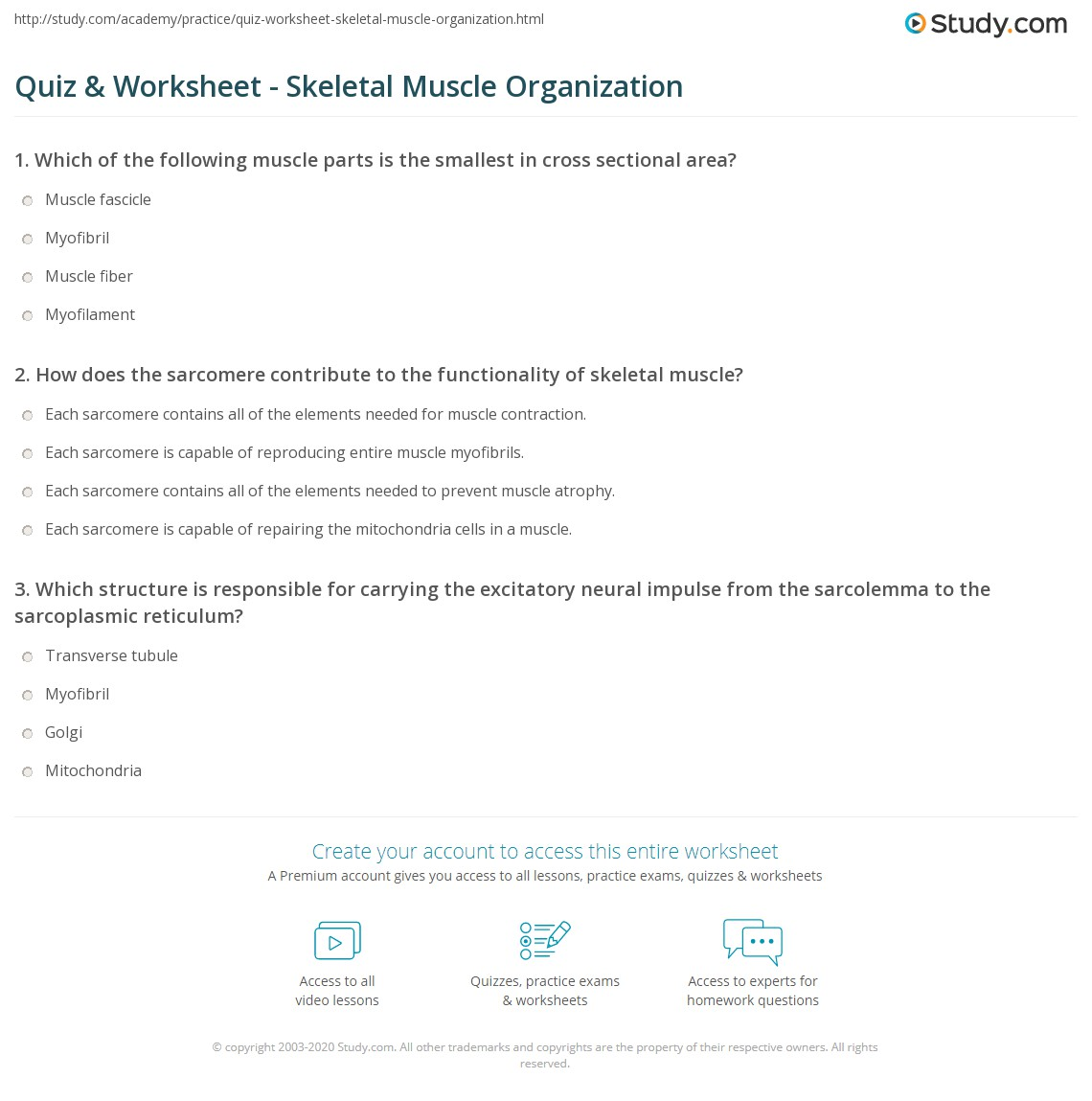 Quiz & Worksheet - Skeletal Muscle Organization | Study.com