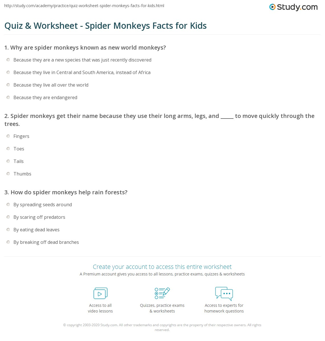 Quiz & Worksheet - Spider Monkeys Facts for Kids | Study.com