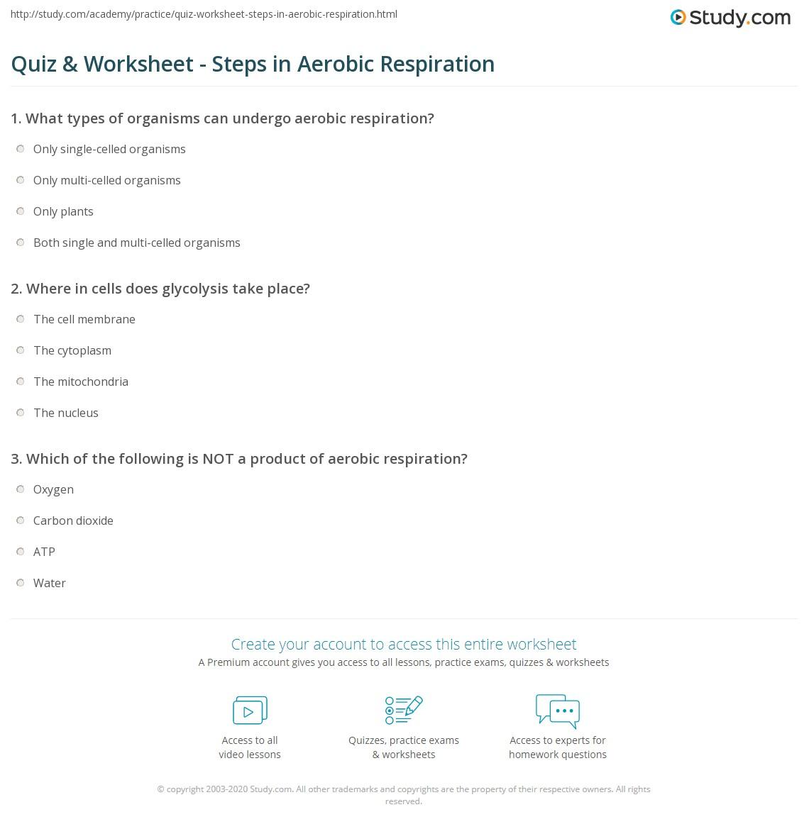 Quiz Worksheet Steps in Aerobic Respiration – Aerobic Respiration Worksheet