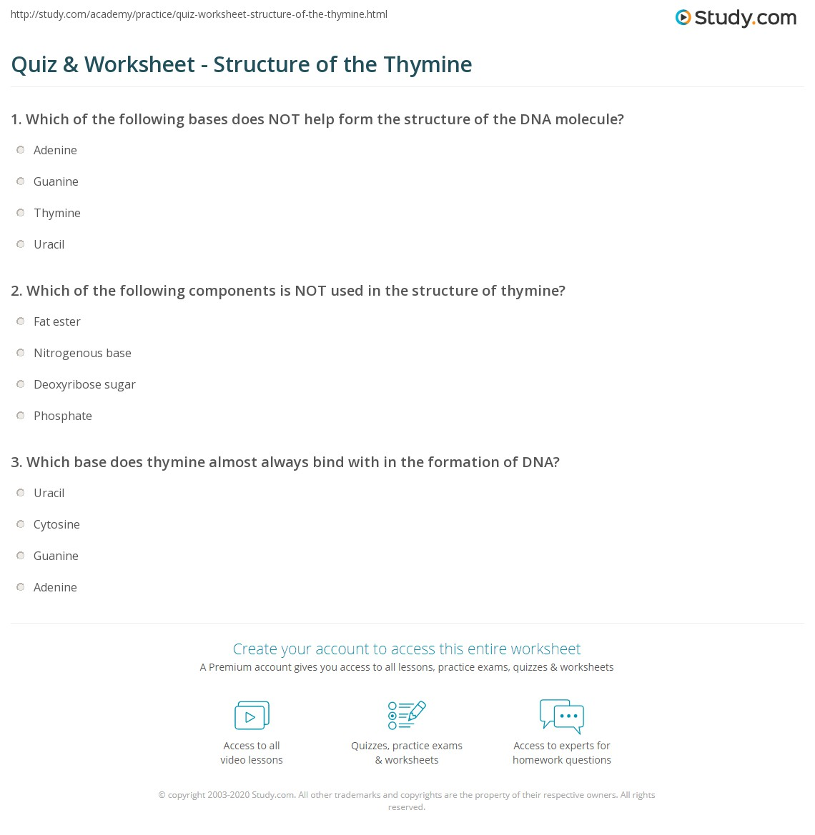 Quiz Worksheet Structure Of The Thymine Study