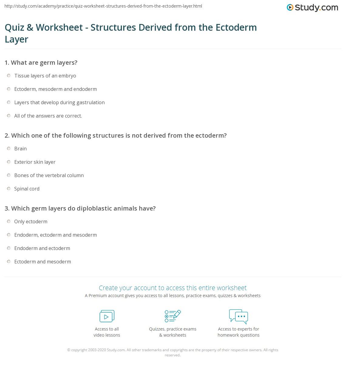 Print Ectoderm Layer: Definition U0026 Derivatives Worksheet