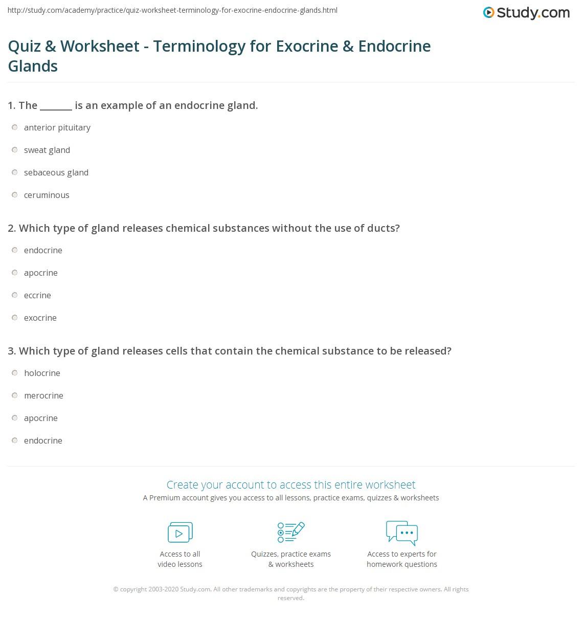 Quiz Worksheet Terminology For Exocrine Endocrine Glands