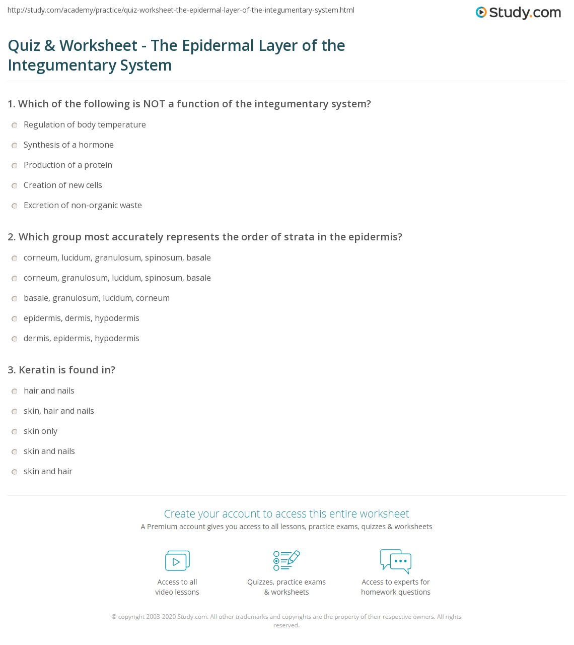 Quiz Worksheet The Epidermal Layer Of The Integumentary System