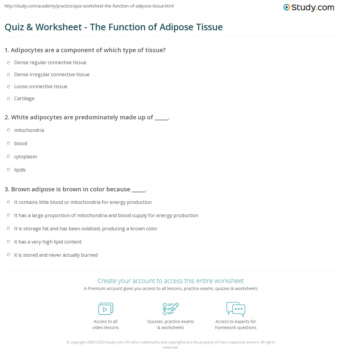 Quiz Worksheet The Function Of Adipose Tissue Study Com