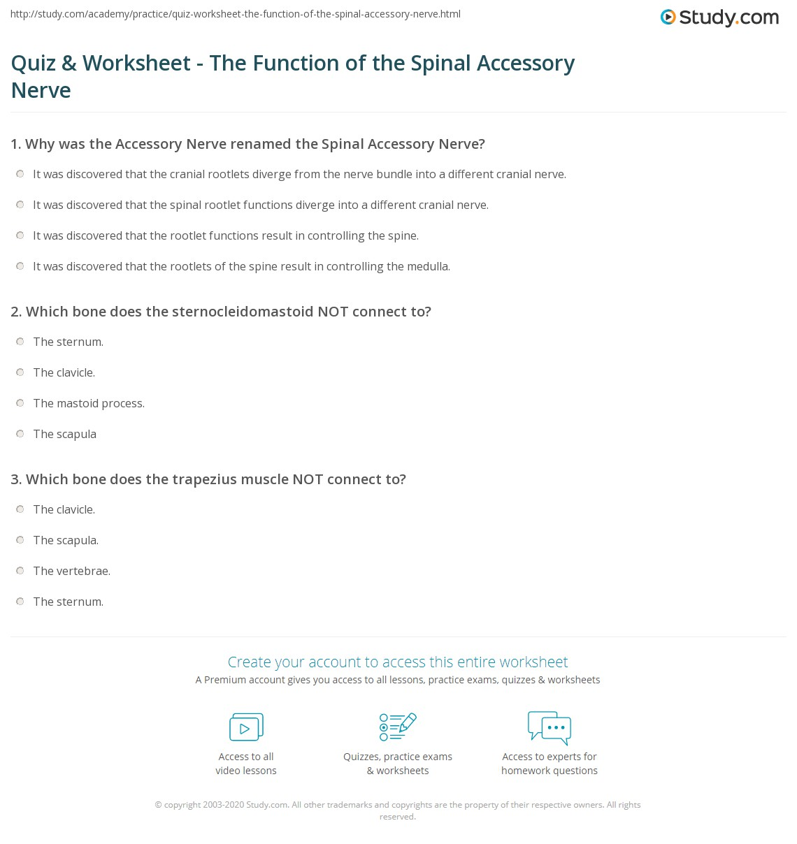 Quiz & Worksheet - The Function of the Spinal Accessory Nerve ...