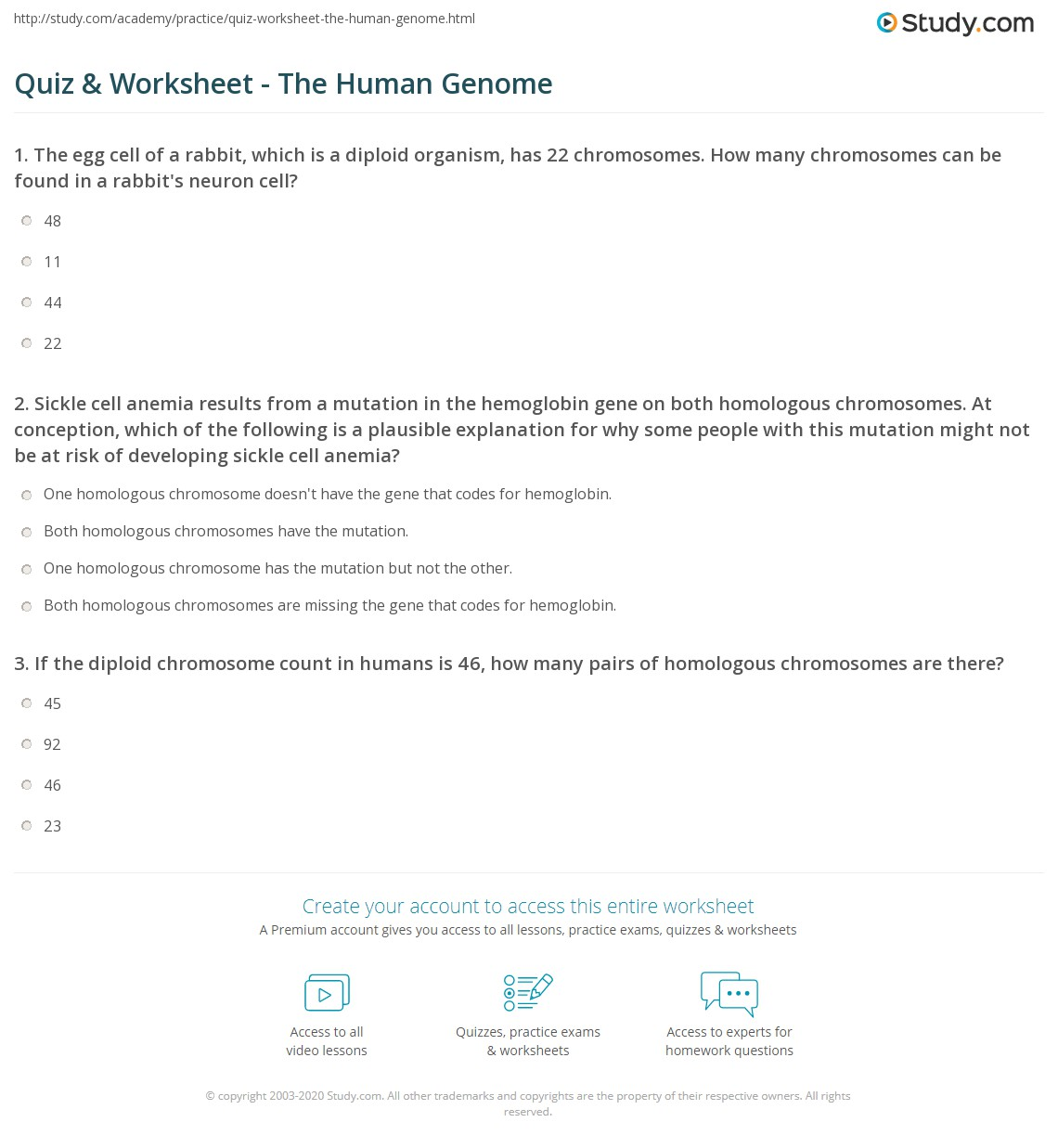 Quiz Worksheet The Human Genome Study
