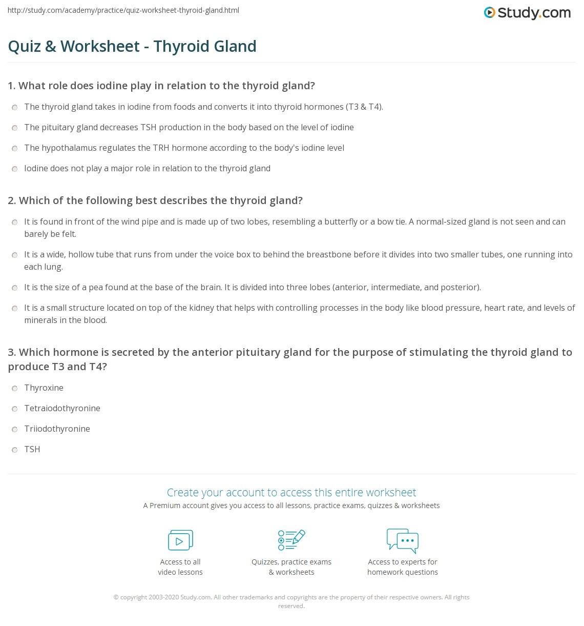 Quiz Worksheet Thyroid Gland Study Com