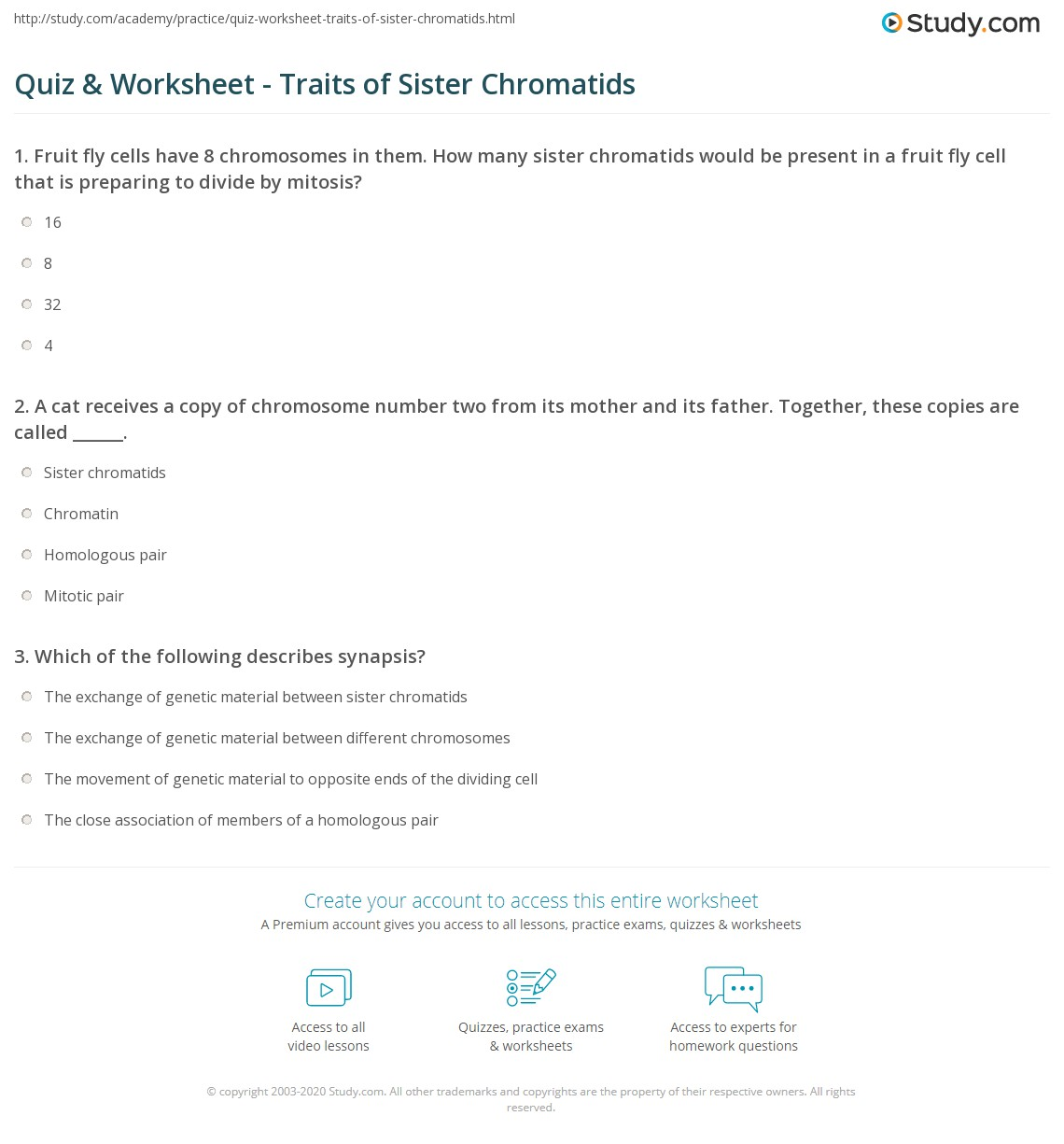 worksheet Chromosome Number Worksheet Answers quiz worksheet traits of sister chromatids study com a cat receives copy chromosome number two from its mother and father together these copies are called