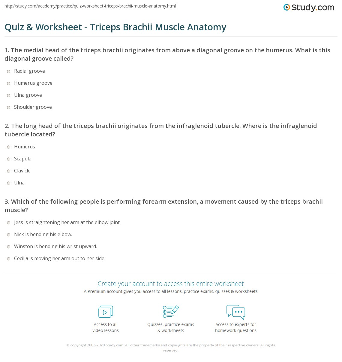 Quiz Worksheet Triceps Brachii Muscle Anatomy Study
