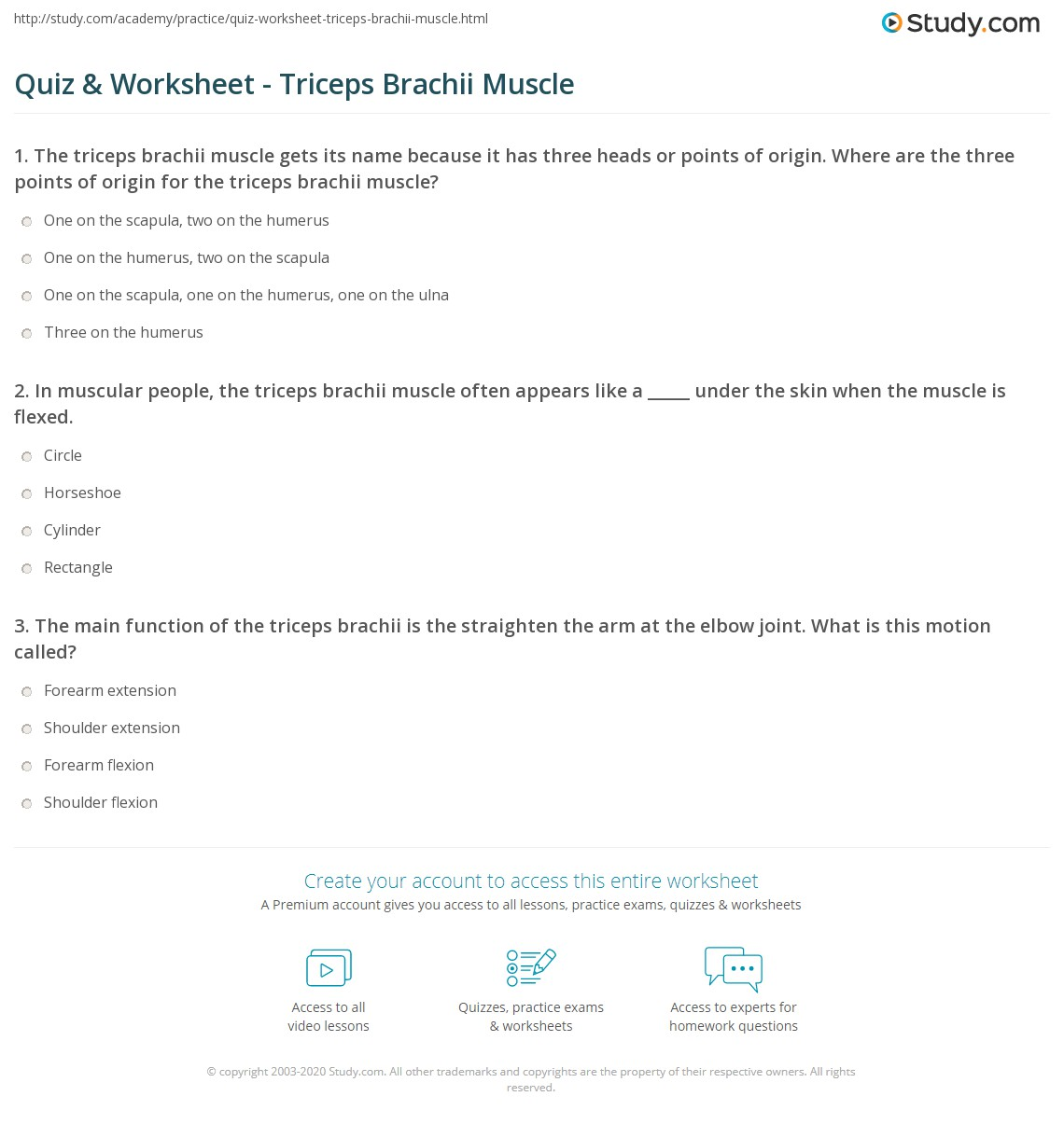 Quiz Worksheet Triceps Brachii Muscle Study