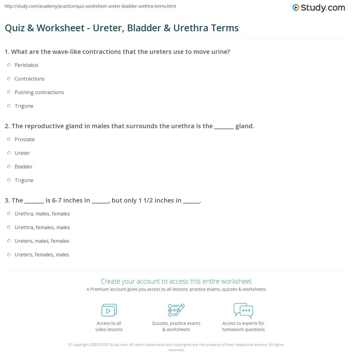 Quiz Worksheet Ureter Bladder Urethra Terms Study