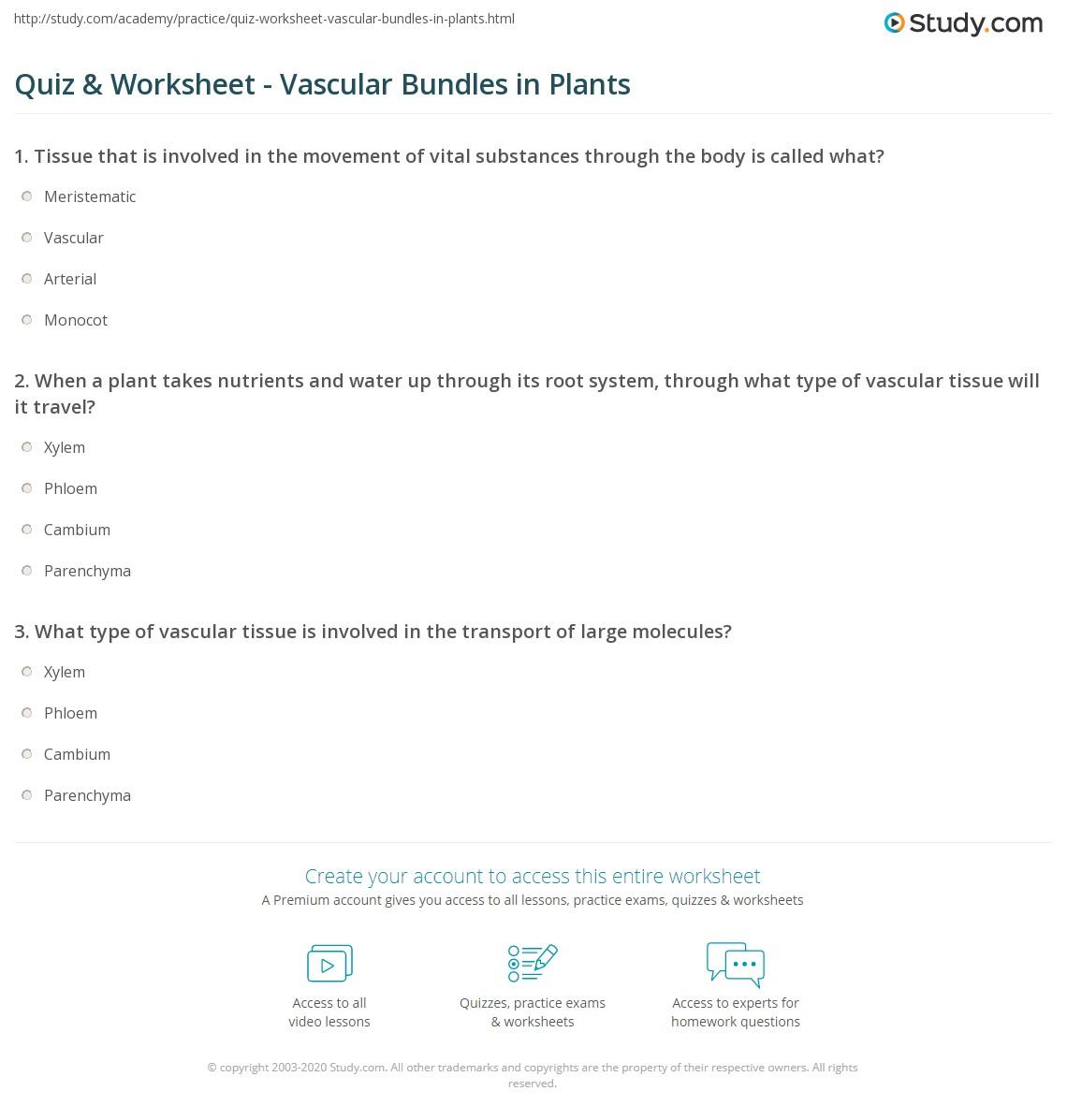 quiz worksheet vascular bundles in plants. Black Bedroom Furniture Sets. Home Design Ideas