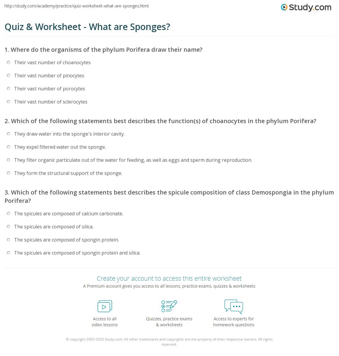 Quiz & Worksheet - What are Sponges? | Study.com