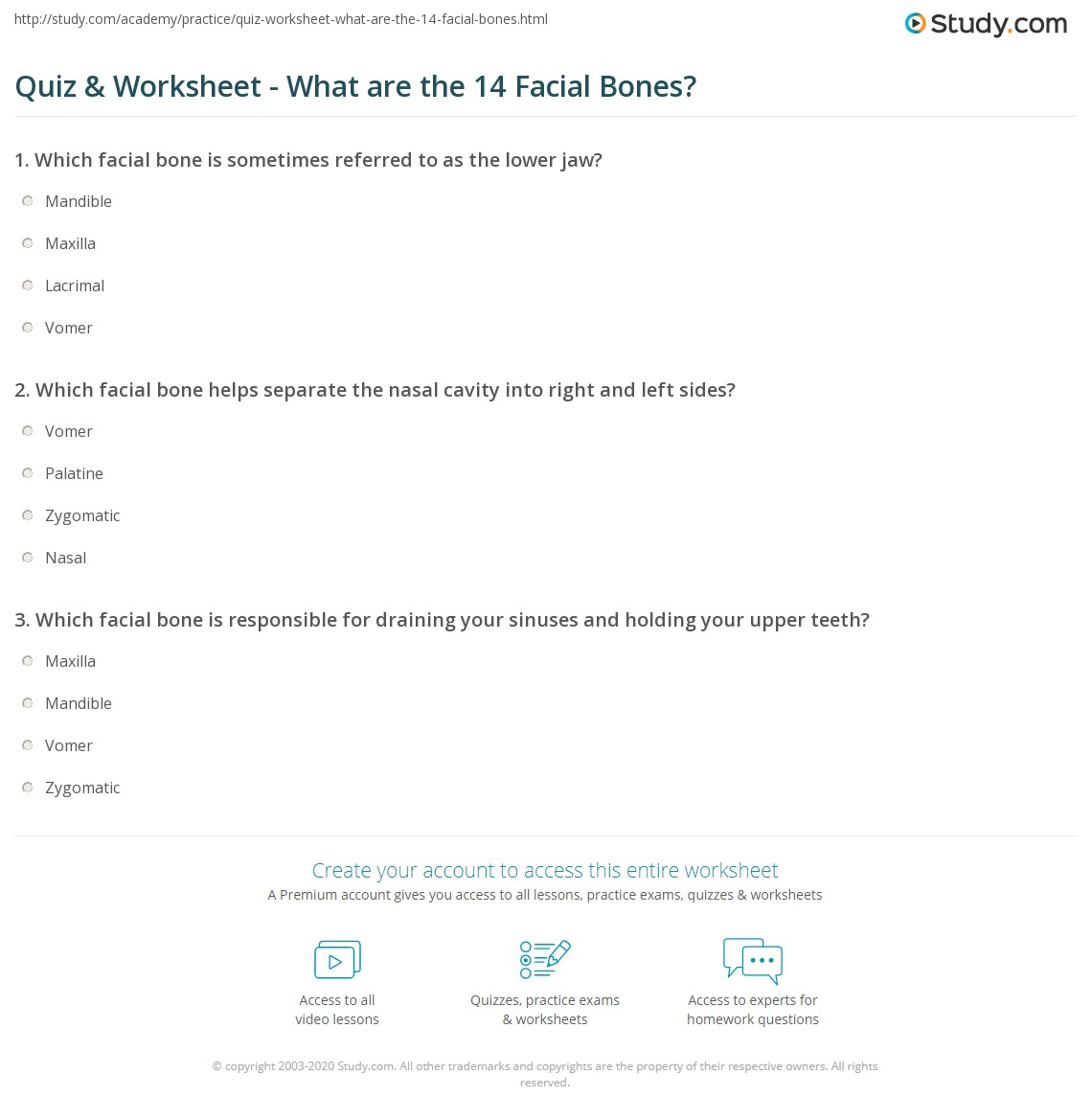 Quiz Worksheet What Are The 14 Facial Bones Study