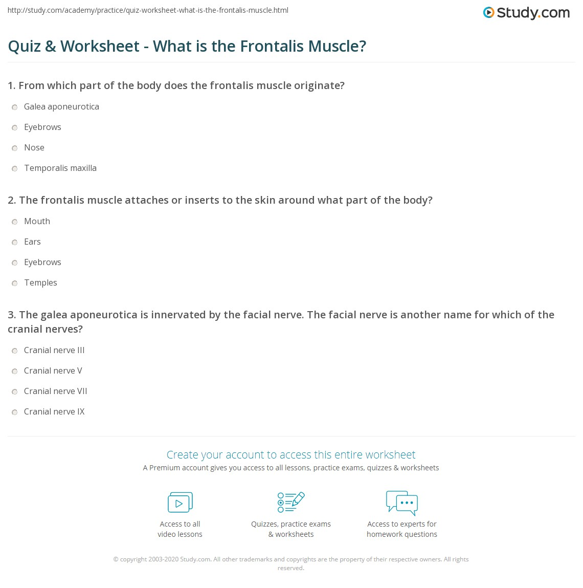 Quiz & Worksheet - What is the Frontalis Muscle?   Study.com