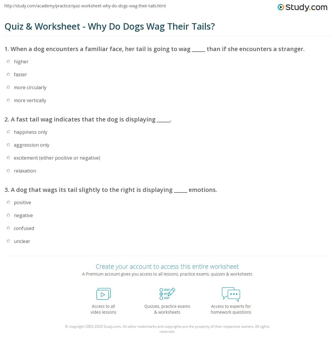 wag quiz answers