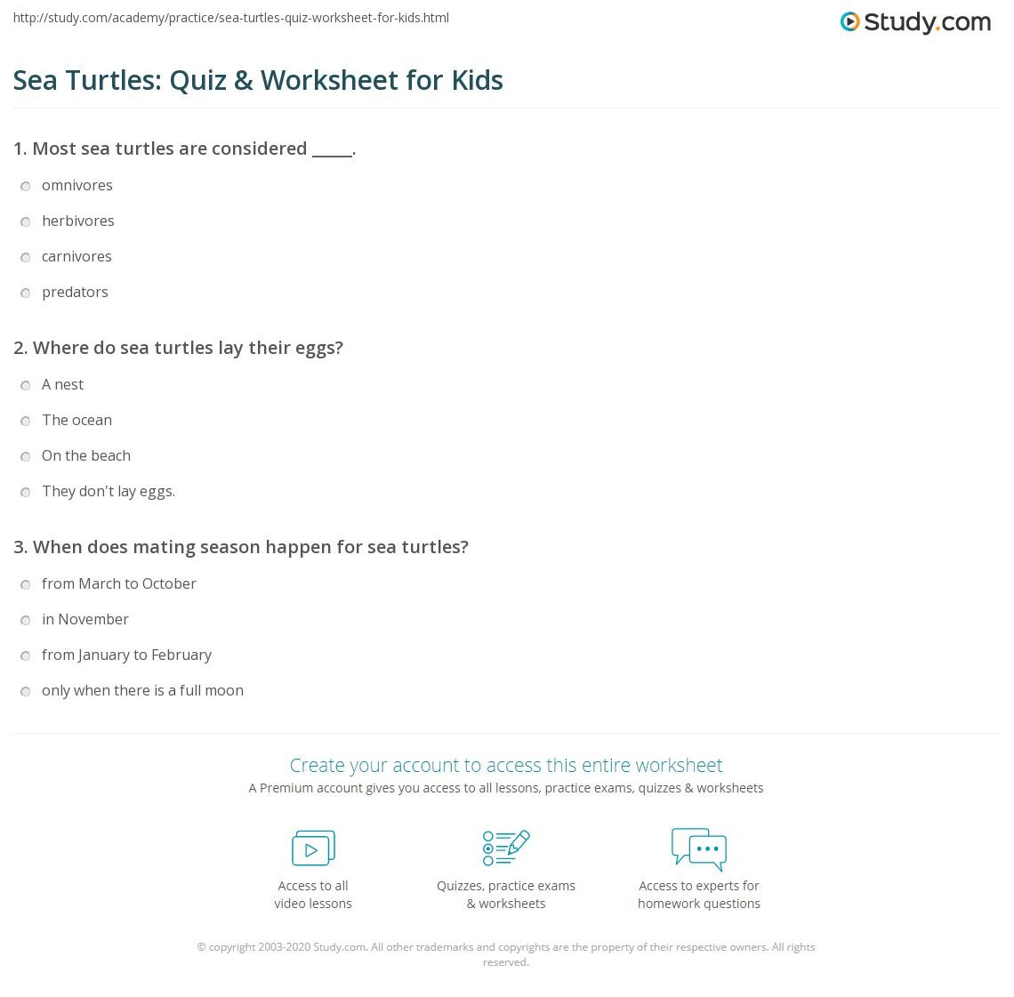 Prime Number Turtles | Worksheet | Education.com