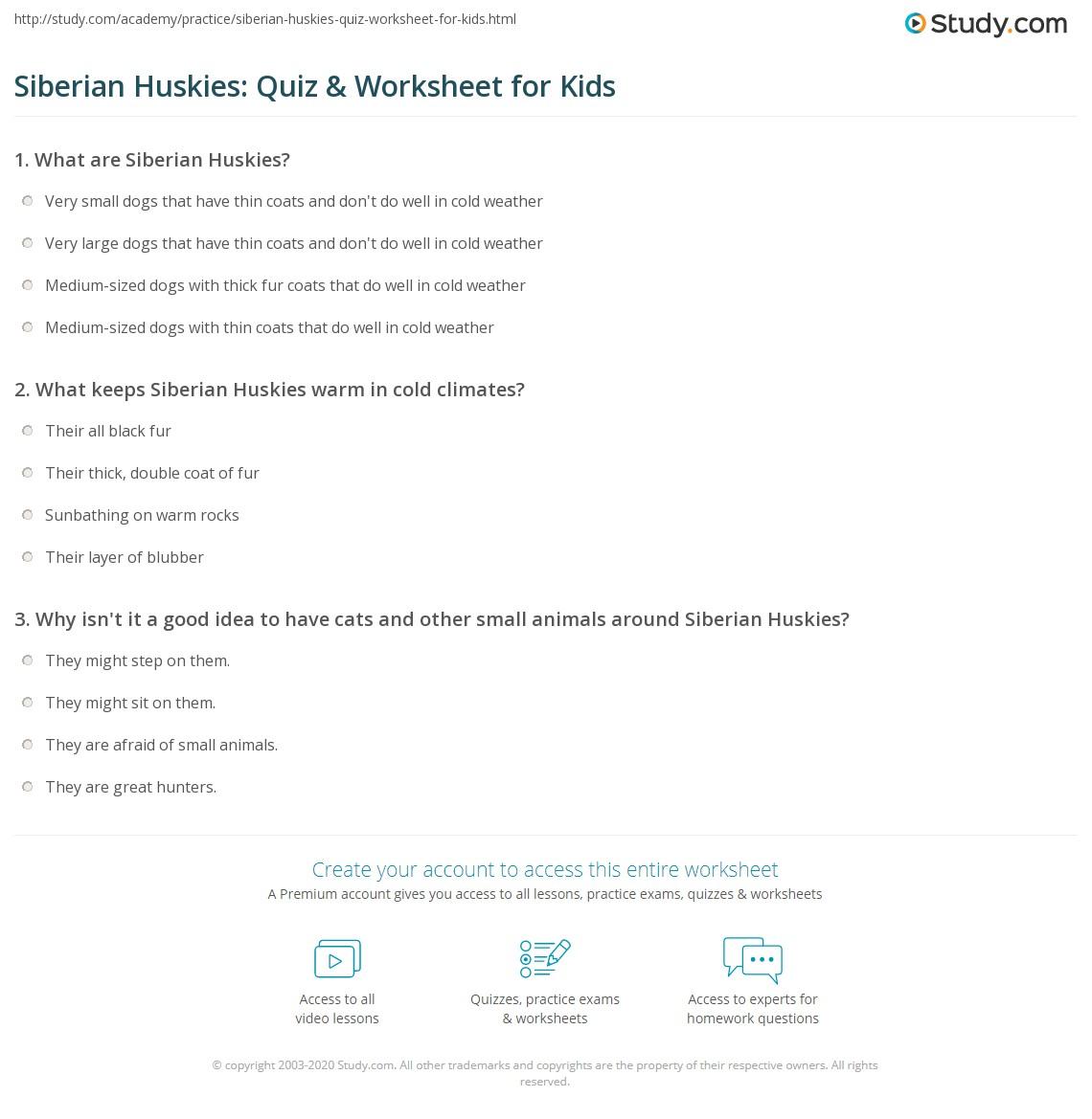 Siberian Huskies: Quiz & Worksheet for Kids | Study.com